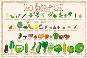 Juillet - calendrier des fruits et légumes de saison