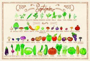 Septembre - calendrier des fruits et légumes de saison